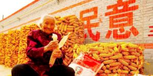 霍州东王村陈奶奶映红这个秋天