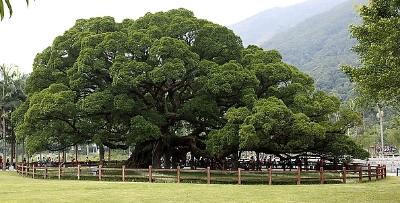 """太原市用新技术给古树做""""心电图"""""""