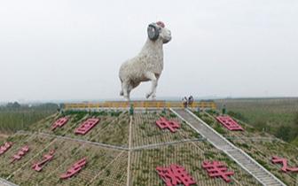 宁夏盐池滩羊与盒马鲜生战略合作在沪正式启动