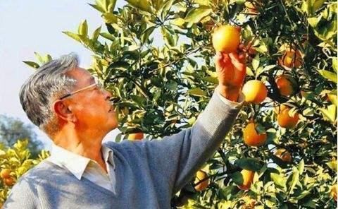 71歲一無所有,85歲億萬富翁!從煙王到橙王,褚時健的傳奇人生