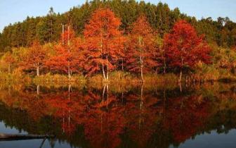 """始兴秋景""""红""""遍朋友圈,戳进来看看吧"""