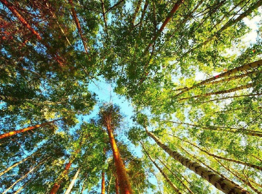 世界上最长寿的树,一个最高活了8000年,一个4万多年都还没烂