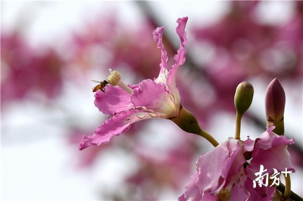 """惠州的秋天是粉色的,这片""""网红花海""""又火了!"""