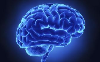 美国科学家研究发现 工作能够修复大脑