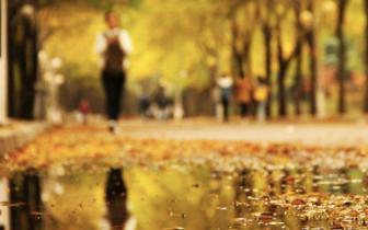 四川秋雨凉凉近日观赏枫叶记得防雨保暖