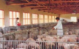 农业农村部:保障规模养猪场和种猪场生产安全