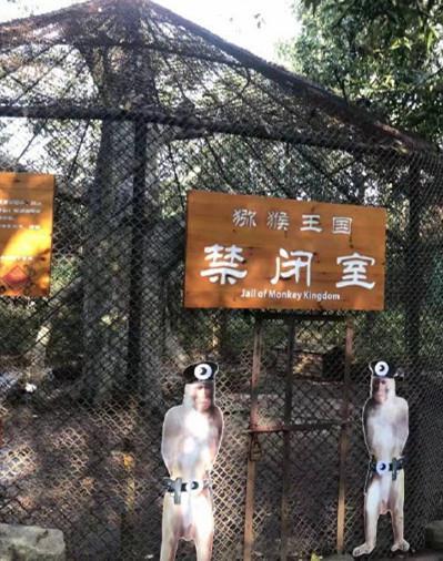 """猕猴被景区关禁闭 曝详情经过""""猴界不法分子""""画面反而"""