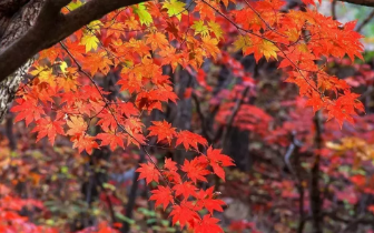 绚丽秋景!四川最全彩林攻略吐血整理!多条路线