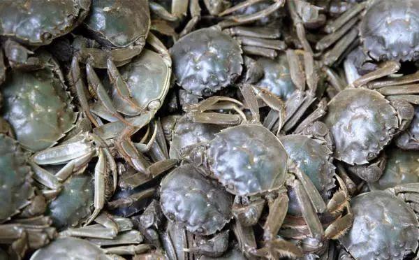 螃蟹怎么吃能让宝宝不拉肚子还变聪明?