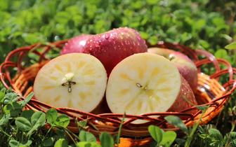 云南丽江·宁蒗2700蜂蜜苹果推介会在上海成功举办