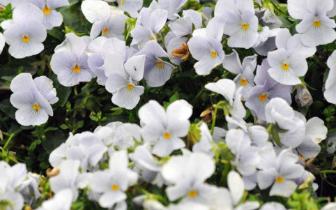 10万平方米花卉,世界奇花异草齐聚重庆……花博会11月