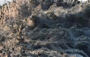 希腊一河岸遭蜘蛛网覆盖