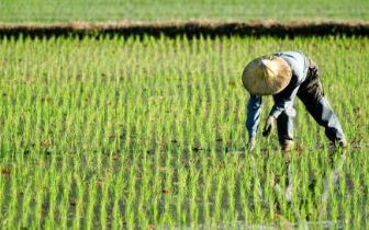 渑池县|渑池县土地托管让农民种地不发愁