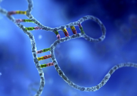 德科学家找到新配方:用简单物质合成RNA四种分