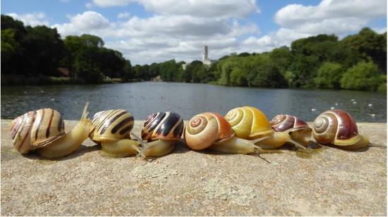 """城市热岛效应日益加剧 蜗牛都被""""热""""黄了?"""