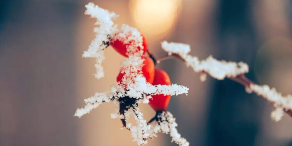 霜降:秋将逝 冬将至