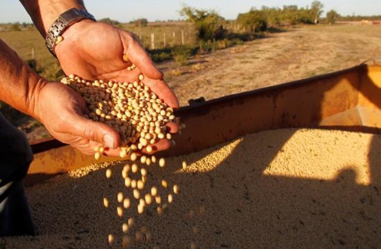 中美贸易摩擦重塑大豆进口格局 倒逼养殖方式转变
