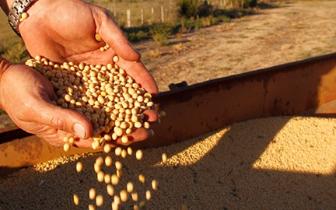 中美贸易摩擦重塑大豆进口格局 倒逼养殖业进步