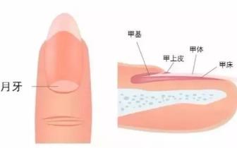 【健康 】手指无月牙不健康?别被忽悠了!