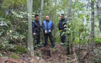 湾沟分局侦破一起重大非法采伐重点保护植物案件