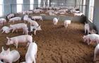 生猪养殖用地