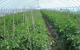 梨树棚膜:四季瓜菜香飘万里