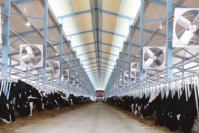 号外|受益蒙牛 现代牧业前三季度亏损额大幅收窄75.3%