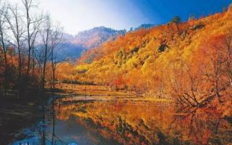 阿坝八大最美红叶彩林观赏地,拥抱秋天的童话!