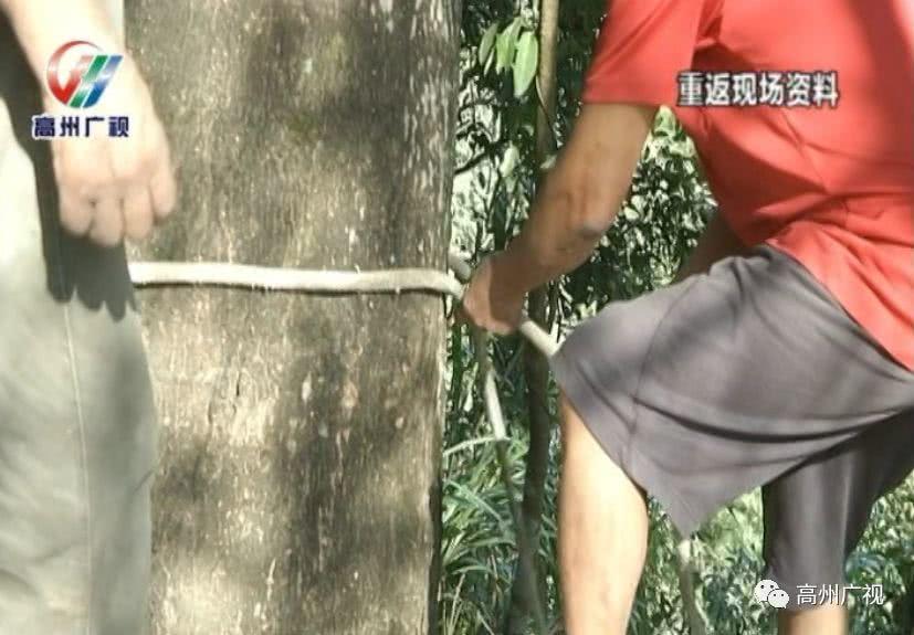 男子将刚出生的女儿装袋抛下山崖:我就是重男轻女