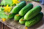 葫芦、黄瓜等蔬菜,一旦有苦味千万别吃