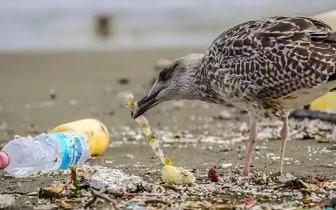 人体内竟含9种塑料!广东人最爱吃的它是重灾区