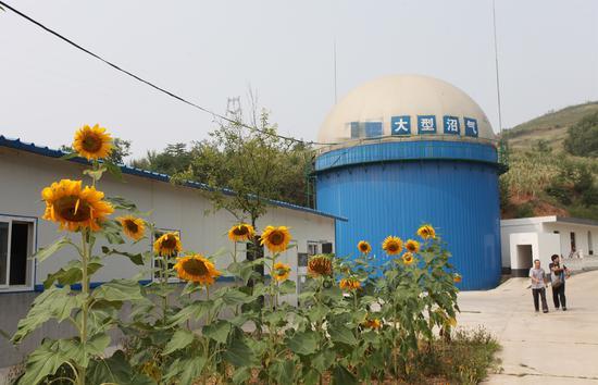 2014年8月2日,陕西商洛,养鸡场的沼气池能给鸡场供电。要想规范治理,还得靠工业化养殖/视觉中国