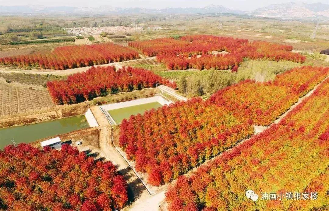 美呆了!秋日青岛必去的最美赏景地  附路线