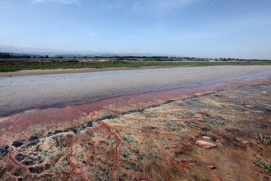 2016年4月18日,陕西宝鸡,一村庄养猪粪水污染渭河,排放超标200多倍/视觉中国