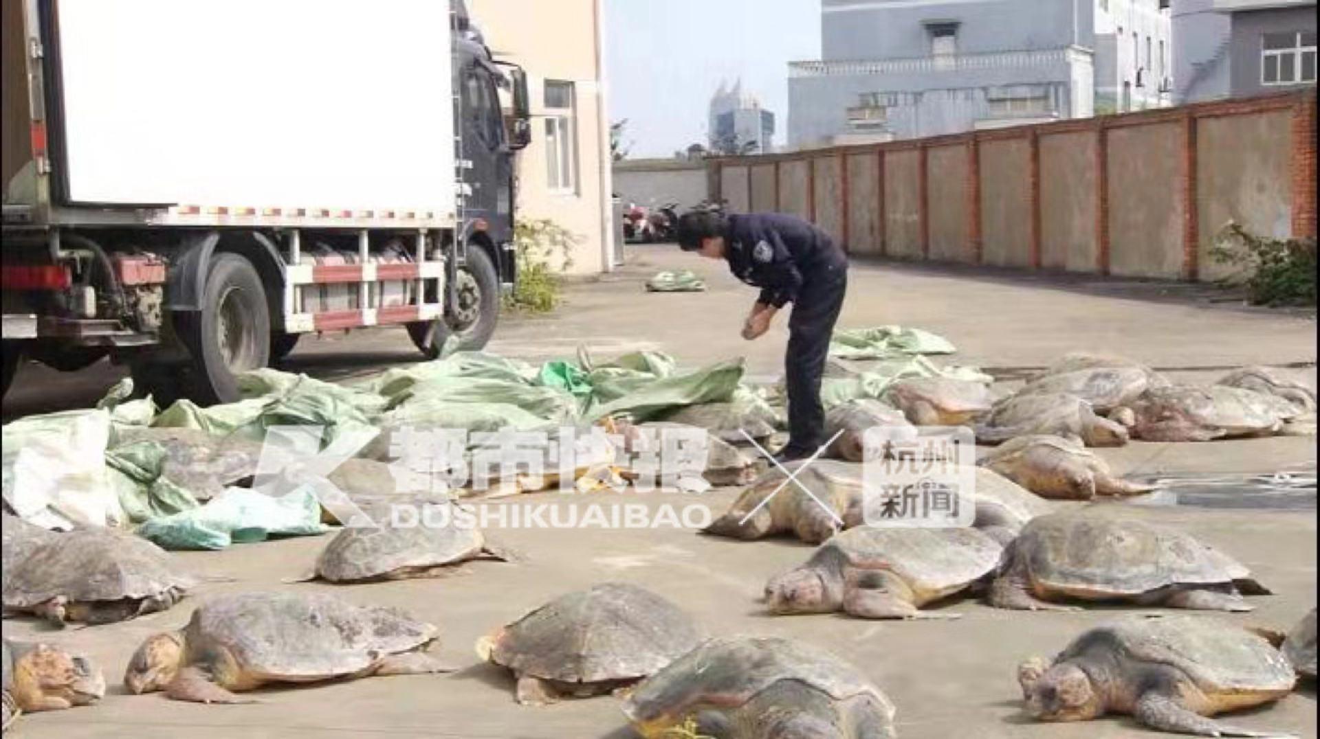 浙江查扣107只被冰冻的海龟 有渔民见过海龟流眼泪