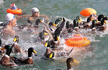欢庆丰收 千人水上抢活鸭