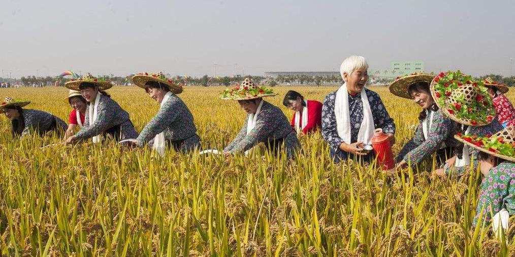 市农研中心谈农民丰收节和北京国际设计周