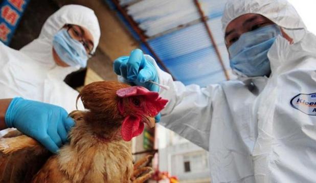 日本研究发现:H7N9病毒或可通过飞沫在空气中传播