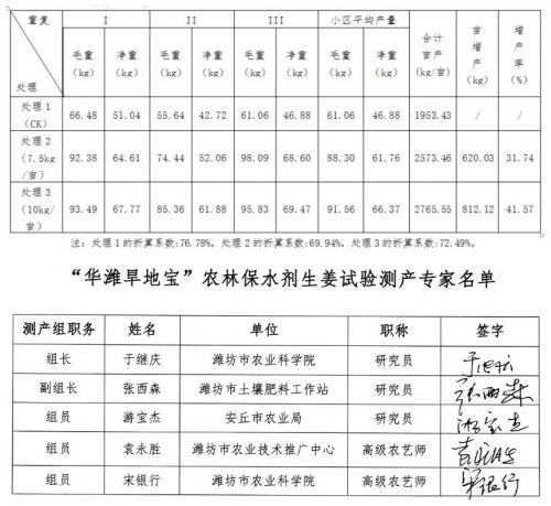 不用化肥农药!山东潍坊眉村大姜试验田增产率41.57%!
