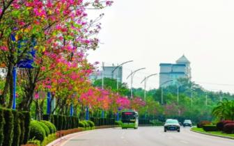 """桂林市园林局积极做好""""桂马""""赛道绿化景观整治"""
