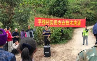 凤山县砦牙乡平雅村:实用技术培训进村屯
