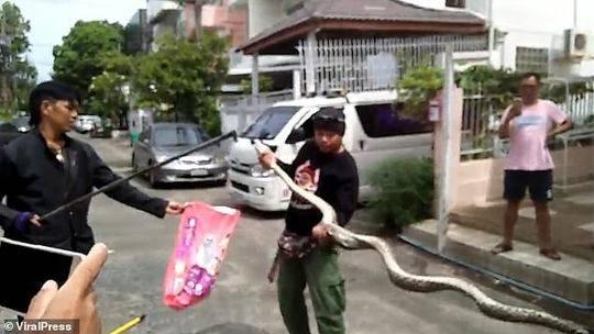 马桶里突然钻出3米长蟒蛇 如厕男子下体被咬伤