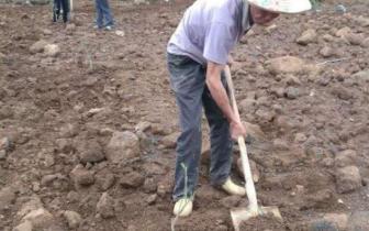 巴马阳春村发展特色水果产业带领群众增收脱贫