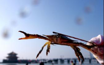 初冬栈桥赶海走起 挖蛤蜊搂蟹子钓蛏子喽