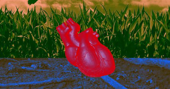 科学家培育出心脏组织,可以和真实心脏一样跳动