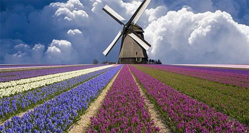试题外泄 荷兰新移民融入社会考试马上全部暂停