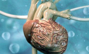 科学家培育心脏组织和真实心脏一样跳动