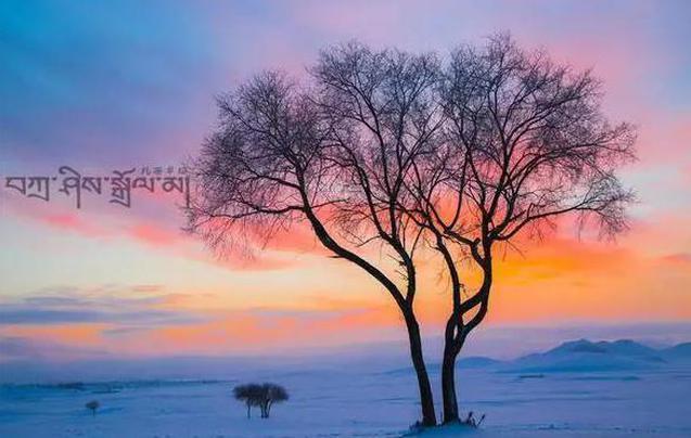 想在大雪中撒欢作乐 乌兰布统最佳选择!