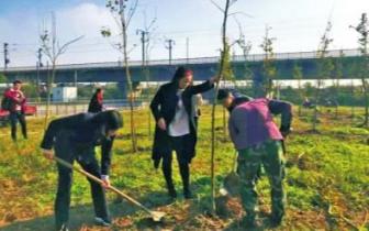 眉山男子擅砍高速路行道树 被追究刑责并补种150株银杏
