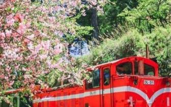 台湾阿里山,乘坐森林小火车带你看遍这五大奇观